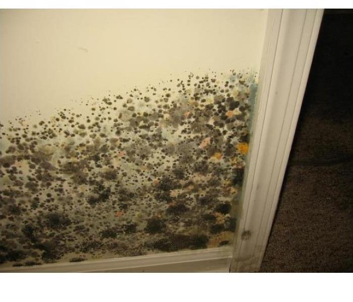 Mold Growth in Yorkville